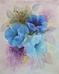 Blume blauer Mohn