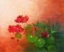 Blume Geranien